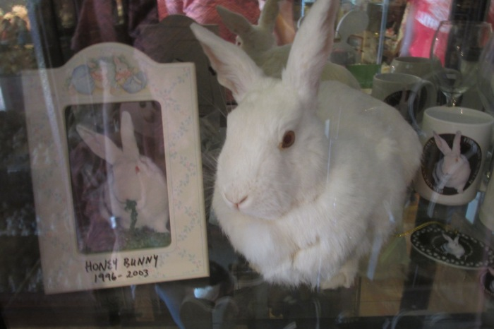 The original mascot of the museum, lovingly stuffed and displayed in its full glory